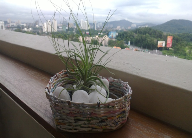 Cool plants for your home and office eco ideal consulting sdn bhd - Cool office plants ...